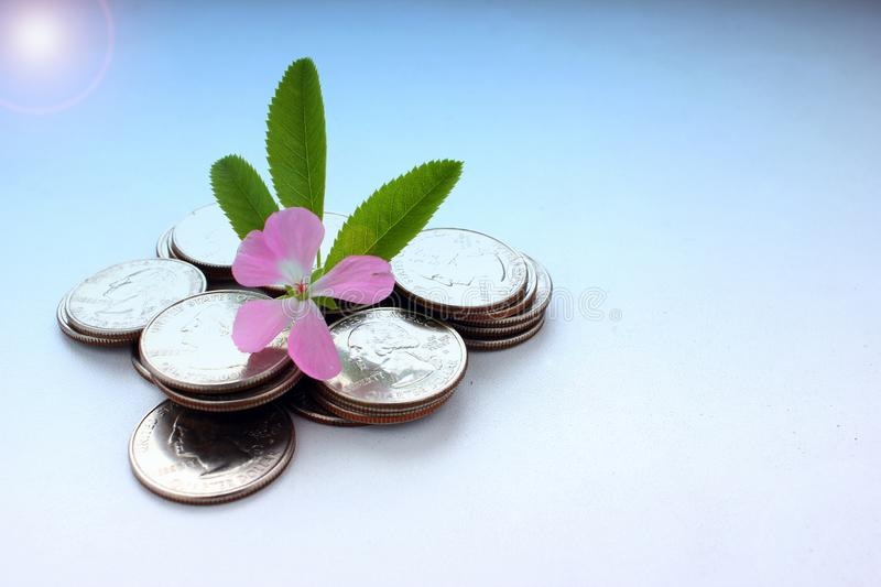 The concept of money growth, the success and prosperity of business as a flower growing at a fast pace, toned stock image