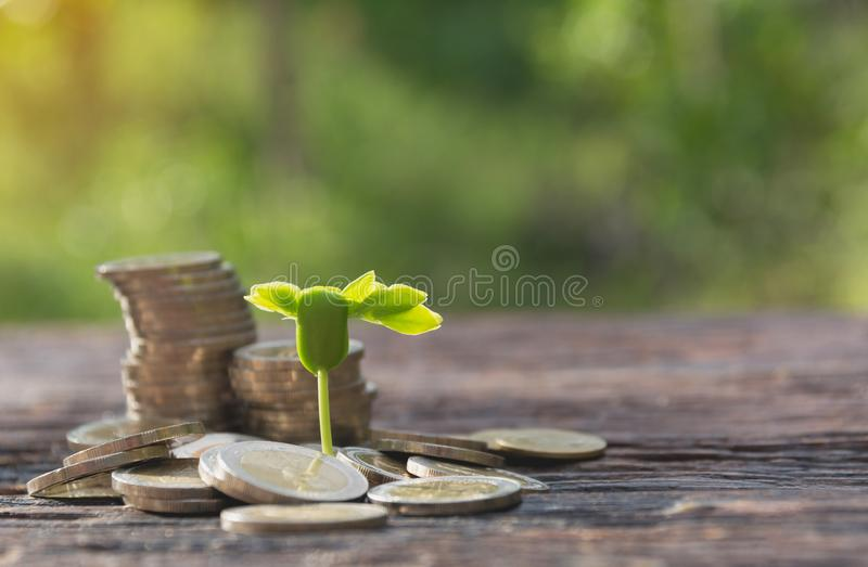 Concept of money tree growing from money. Financial and saving. Concept stock photos
