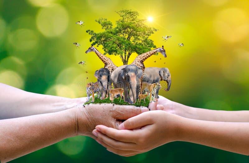 Concept Nature reserve conserve Wildlife reserve tiger Deer Global Erwärming Food Loaf Ecology Human hand Schützen der Wildnis un lizenzfreie stockbilder