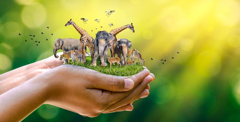 Concept Nature reserve conserve Wildlife reserve tiger Deer Global warming Food Loaf Ecology Human hands protecting the wild and royalty free illustration
