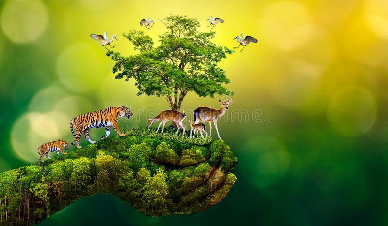 Concept Nature reserve conserve Wildlife reserve tiger Deer Global warming Food Loaf Ecology Human hands protecting the wild and w. Ild animals tigers deer royalty free stock images