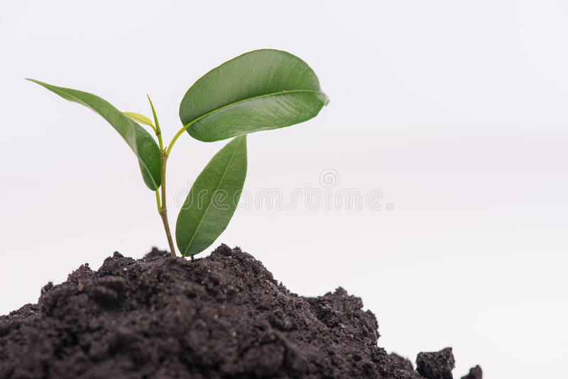 Concept of new life. Little green plant growing in a heap of soil isolated on white background. Concept of new life stock photo