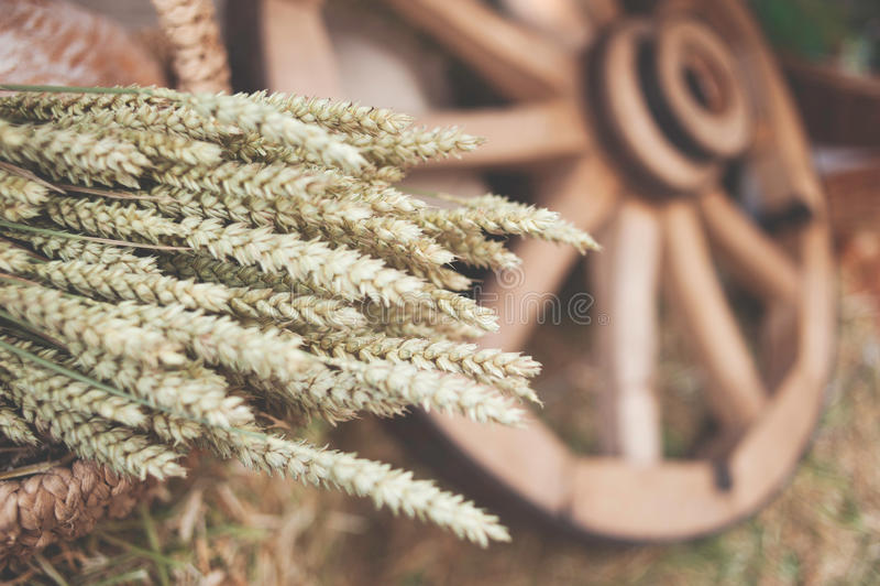 Concept: oren van tarwe in een mand stock foto's