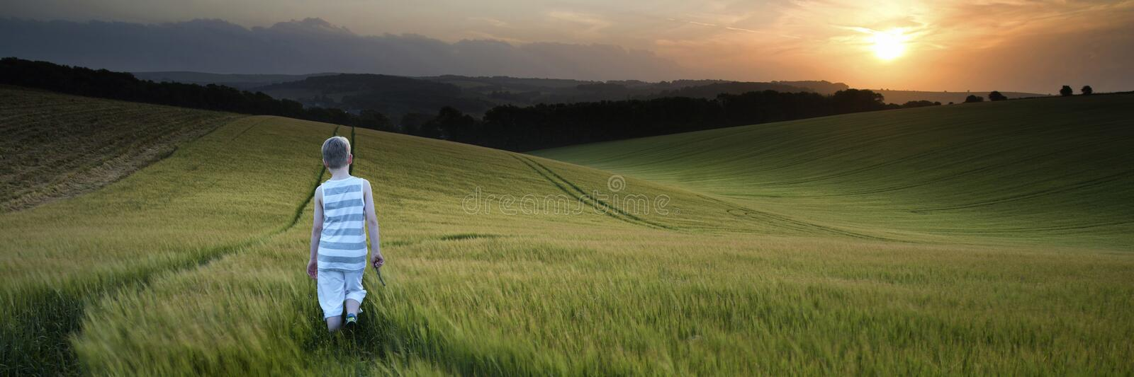 Concept panorama landscape young boy walking through field at sunset in Summer stock photography