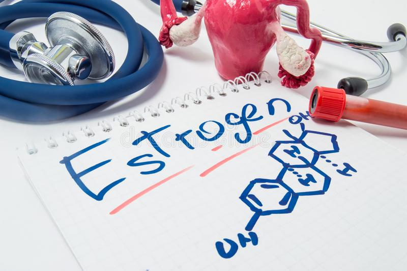 Concept photo of female sex hormone Estrogen and its level in body. Drawn chemical formula of estrogen lies beside anatomical shap royalty free stock image