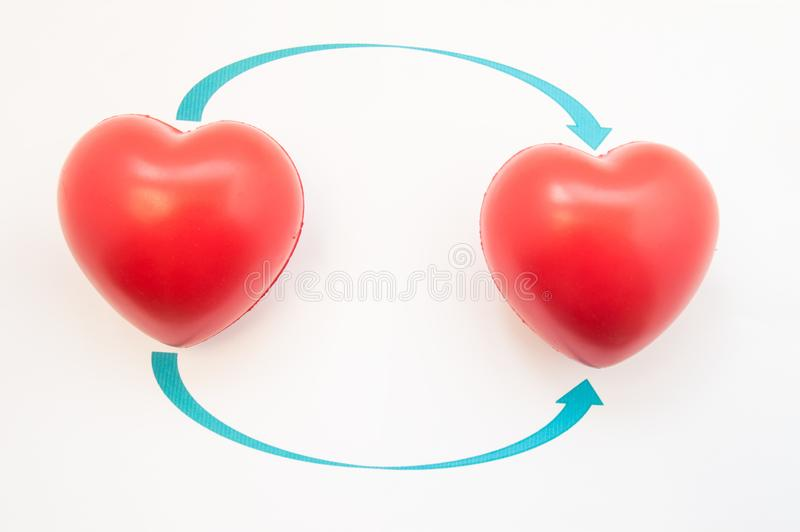 Concept photo of heart transplant. Two 3D anatomical heart shapes are reversed to direction of arrows. Illustration of heart trans royalty free illustration