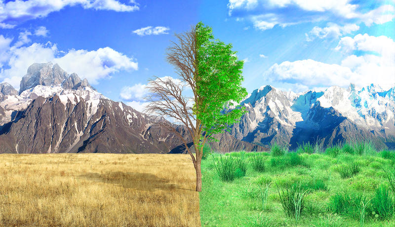 The concept of rebirth. Dead and live tree on the mountains backgrounds stock image