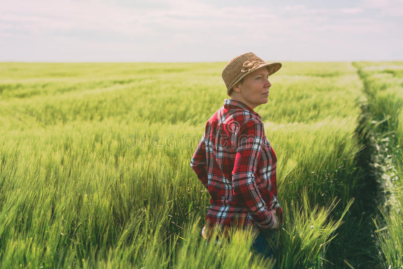 Concept of responsible farming, female farmer in cereal crops field. Woman agronomist looking over the wheat field to the horizon on a windy day and planning royalty free stock photography