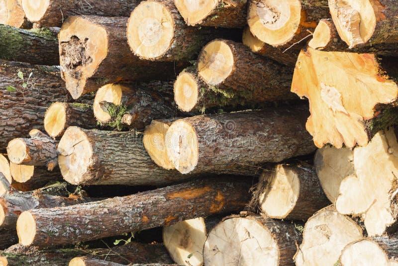 Concept scié de protection de la nature de beaucoup de troncs d'arbre image stock