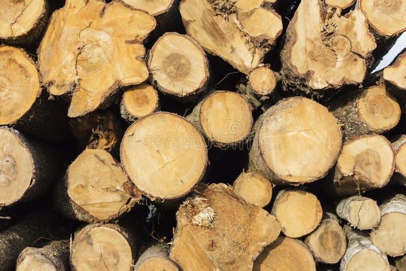 Concept scié de protection de la nature de beaucoup de troncs d'arbre images stock