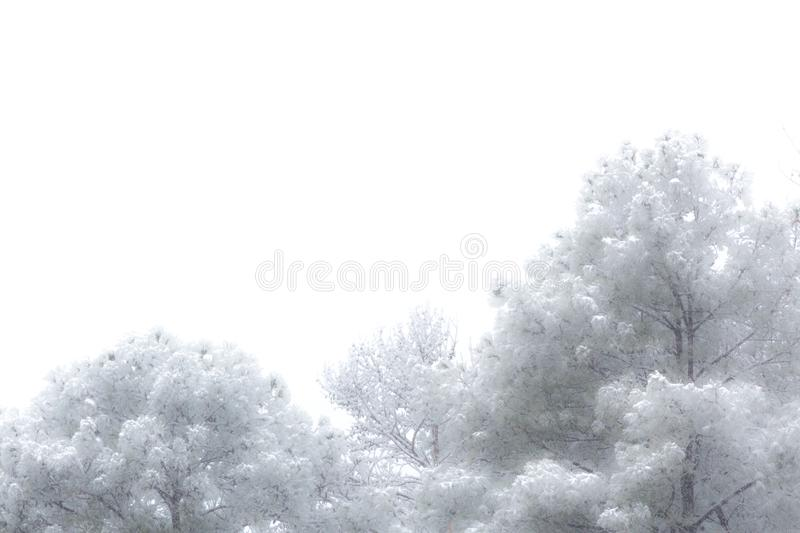 Concept snow on treeline background, very soft focus, copy space stock images
