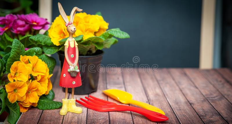 Concept Spring planting on the balcony, in the house, harmony and beauty. Flowers Primula red and yellow and garden tools, royalty free stock photos