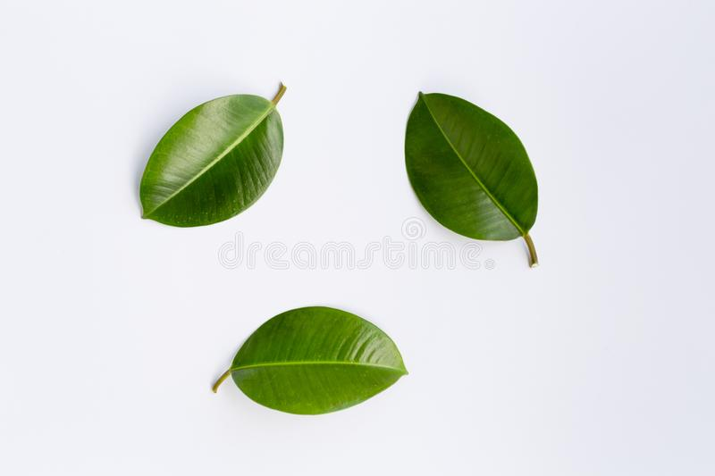 Concept - top view of natural leaves isolated on white background. For mockup stock photos