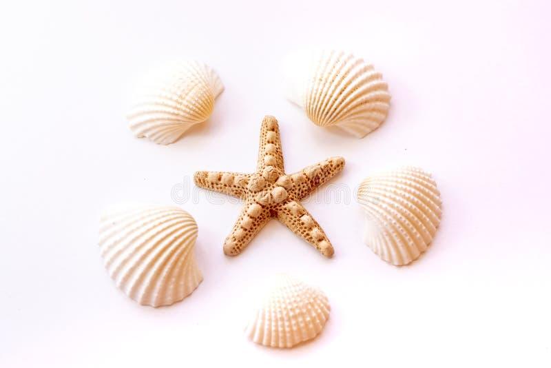 Concept tropical de vacances d'?t? Coquillages, étoiles de mer sur le fond rose en pastel Concept d'?t? images libres de droits