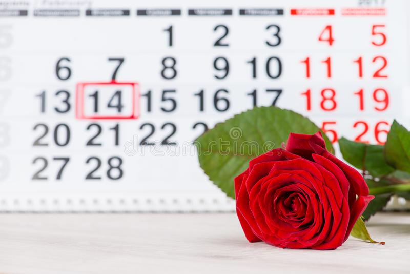 Concept Valentine`s Day, red rose on background on the calendar stock photos