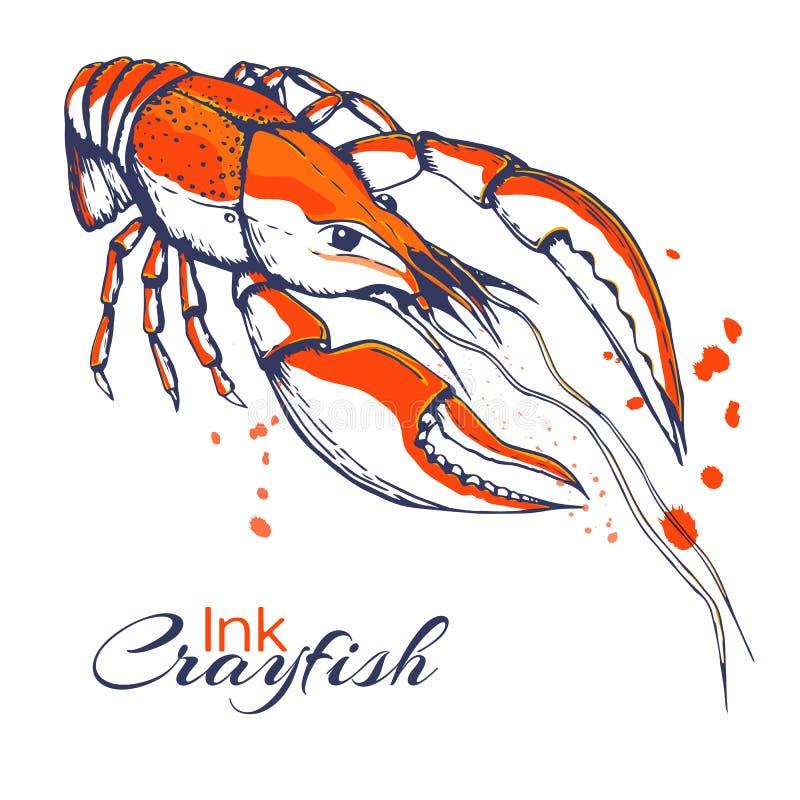 Concept van inkt het hand getrokken rivierkreeften voor decoratie of ontwerp Inkt bespatte rivierkreeftenillustratie rode gekookt vector illustratie