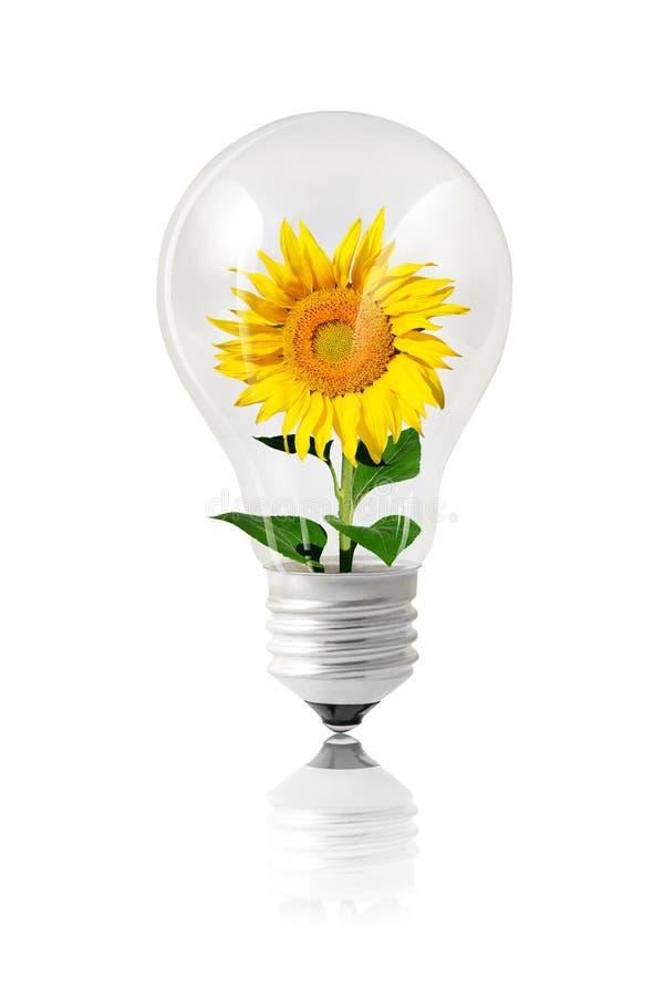 Concept vert d'énergie d'ampoule sur le blanc illustration de vecteur