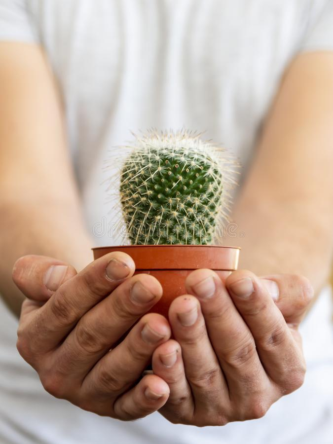 concept with a young man in shirt, holding a cactus with his hands suggesting care stock image