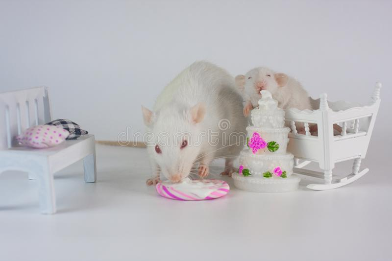 The concept is yummy. Rat bit the cake. stock photos