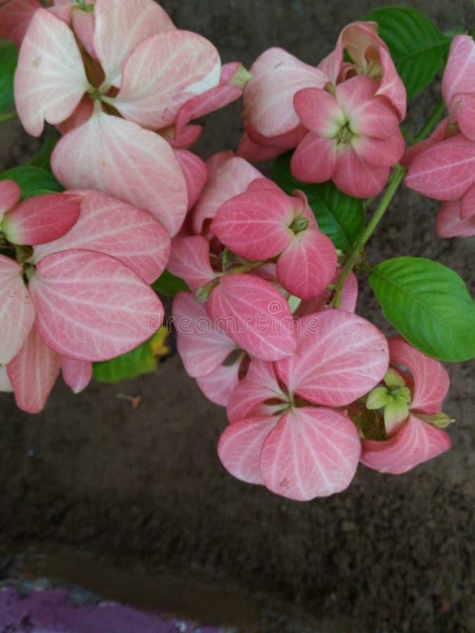 Concepteur Pink Flower Background photo libre de droits