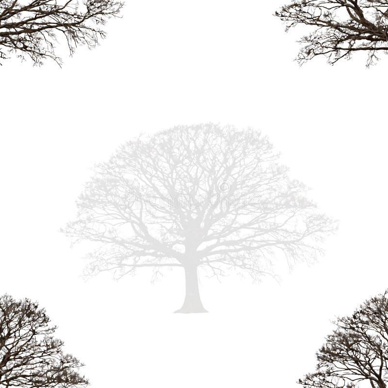 Conception abstraite de chêne illustration libre de droits