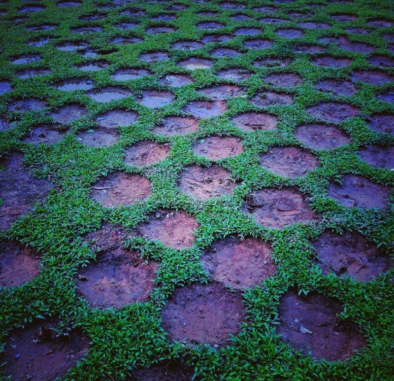 Conception d'herbe photos stock