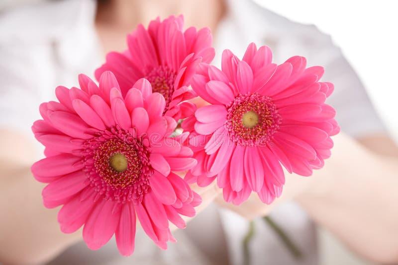 Conception d'hygiène de femme Gerbera rose de fleur dans des mains femelles photo libre de droits
