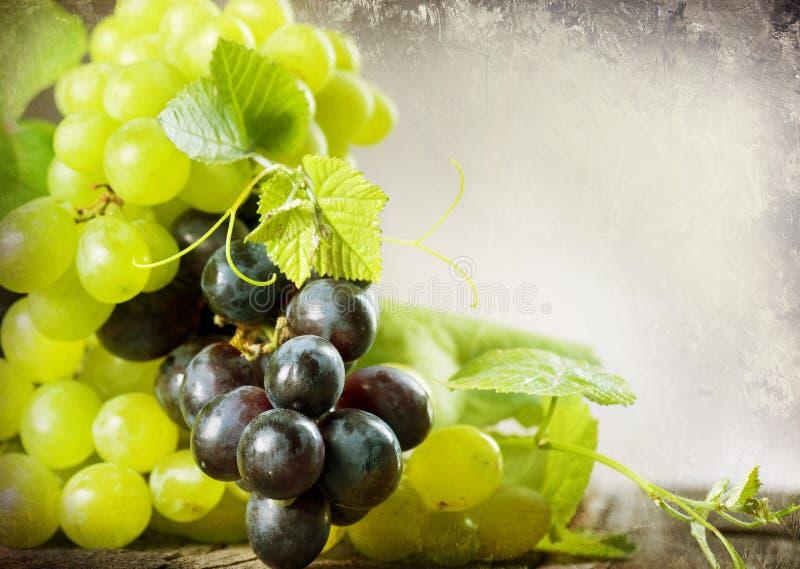 Conception de cadre de raisins images libres de droits