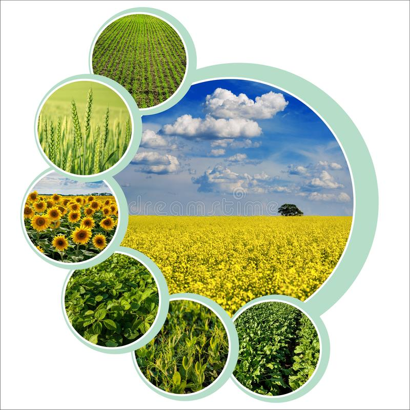 Conception de cercles individuels pour thème agraire avec photo photographie stock