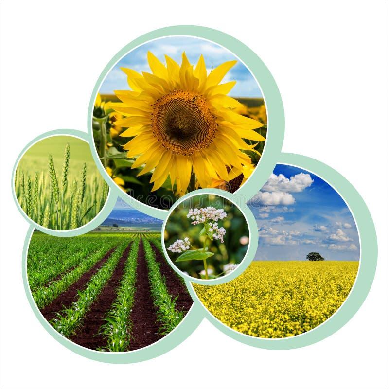 Conception de cercles individuels pour thème agraire avec photo image libre de droits