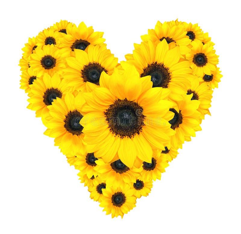 Conception de fleur de coeur faite de tournesols jaunes d'isolement sur le blanc photographie stock libre de droits