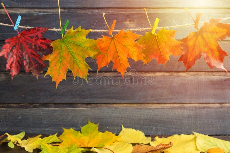 Conception de l'avant-projet d'automne avec l'espace de copie avec les feuilles et le sunl d'érable photographie stock libre de droits