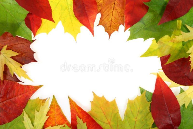 Conception de lames d'automne photographie stock