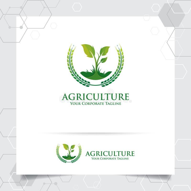 Conception de logo d'agriculture avec le concept de l'icône de grain et du vecteur de feuilles d'usine Logo vert de nature utilis illustration stock