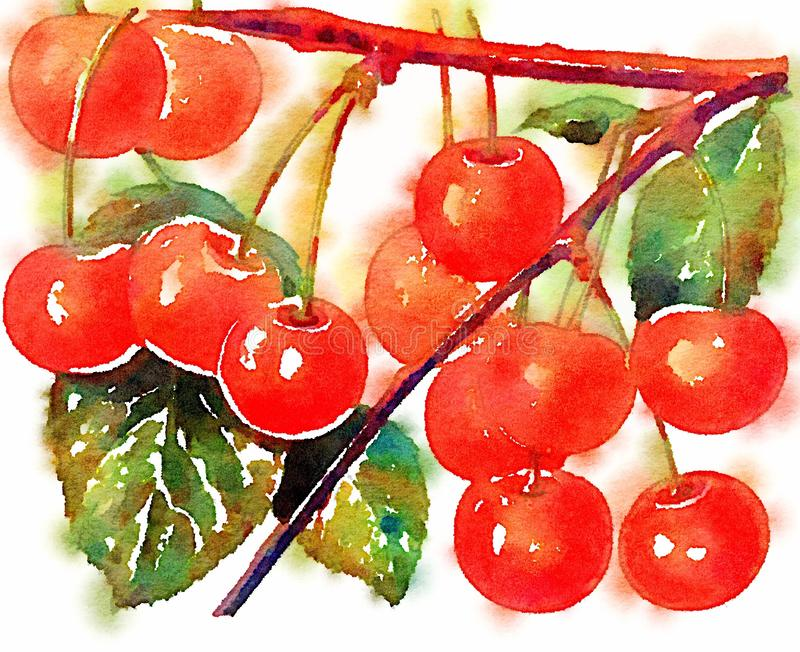 Conception de peinture d'illustration de cerises d'aquarelle illustration libre de droits