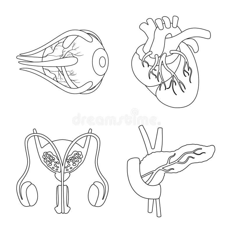 Conception de vecteur d'ic?ne d'anatomie et d'organe Collection de l'anatomie et du symbole boursier m?dical pour le Web illustration stock