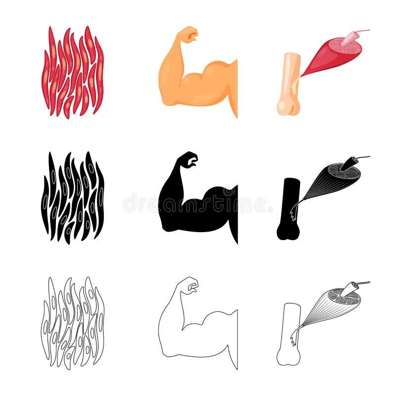 Conception de vecteur de fibre et de logo musculaire Collection d'ic?ne de vecteur de fibre et de corps pour des actions illustration de vecteur