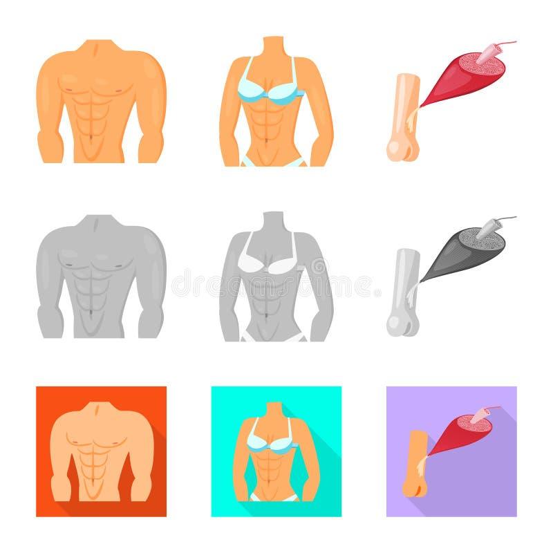Conception de vecteur de fibre et de signe musculaire Collection de symbole boursier de fibre et de corps pour le Web illustration stock