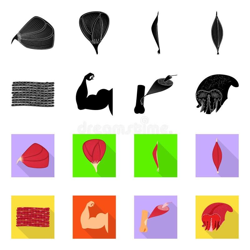 Conception de vecteur de fibre et de symbole musculaire Collection d'ic?ne de vecteur de fibre et de corps pour des actions illustration libre de droits
