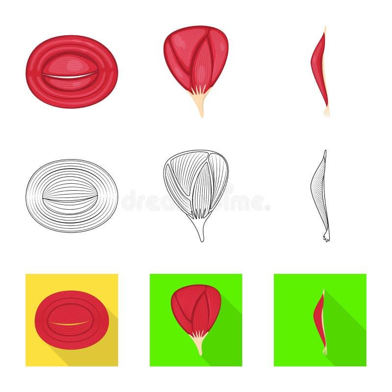 Conception de vecteur de fibre et de symbole musculaire Collection d'illustration de vecteur d'actions de fibre et de corps illustration de vecteur