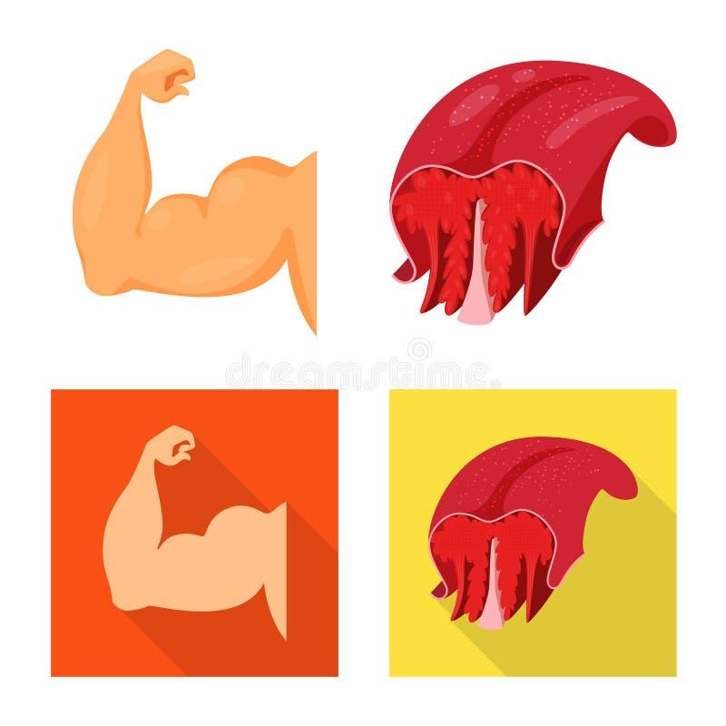 Conception de vecteur de fibre et de symbole musculaire Collection d'illustration de vecteur d'actions de fibre et de corps illustration stock