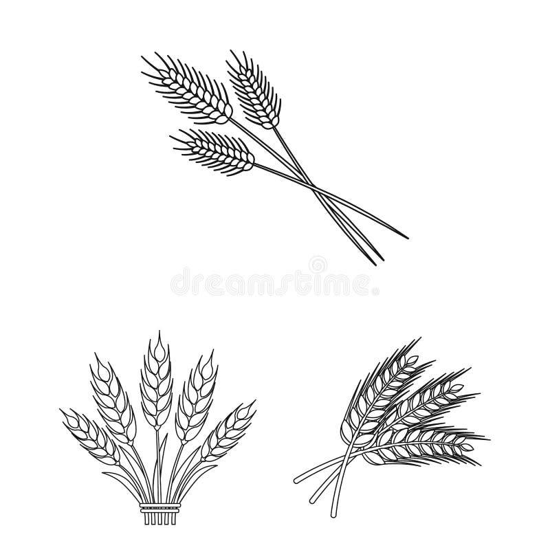 Conception de vecteur de logo de blé et de tige Collection de symbole boursier de blé et de grain pour le Web illustration libre de droits