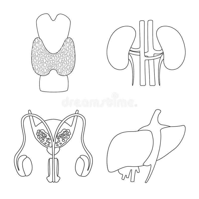 Conception de vecteur de logo d'anatomie et d'organe Placez de l'anatomie et de l'illustration courante m?dicale de vecteur illustration de vecteur