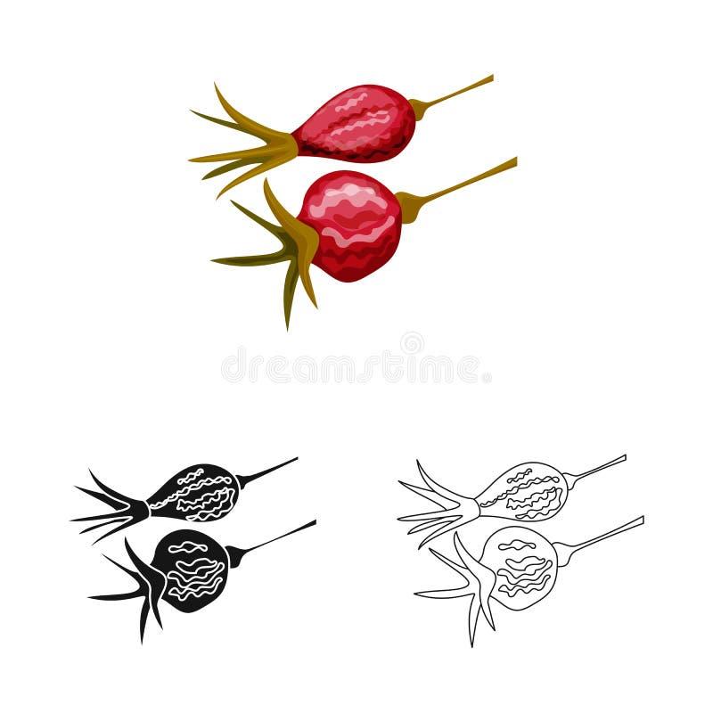 Conception de vecteur de rose et de logo sec Collection de rose et d'illustration courante de vecteur de botanique illustration libre de droits