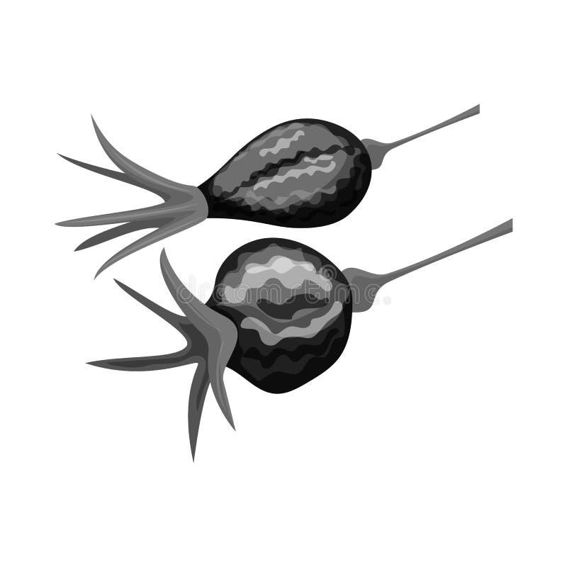 Conception de vecteur de rose et de symbole sec Placez de la rose et du symbole boursier de botanique pour le Web illustration de vecteur