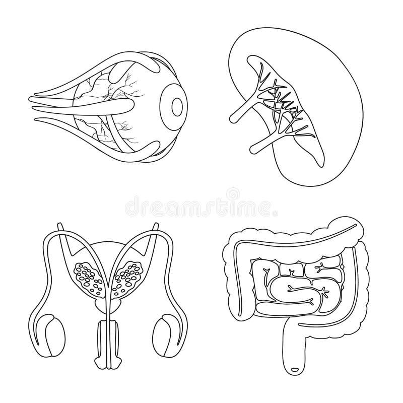 Conception de vecteur de symbole d'anatomie et d'organe Collection d'anatomie et ic?ne m?dicale de vecteur pour des actions illustration libre de droits