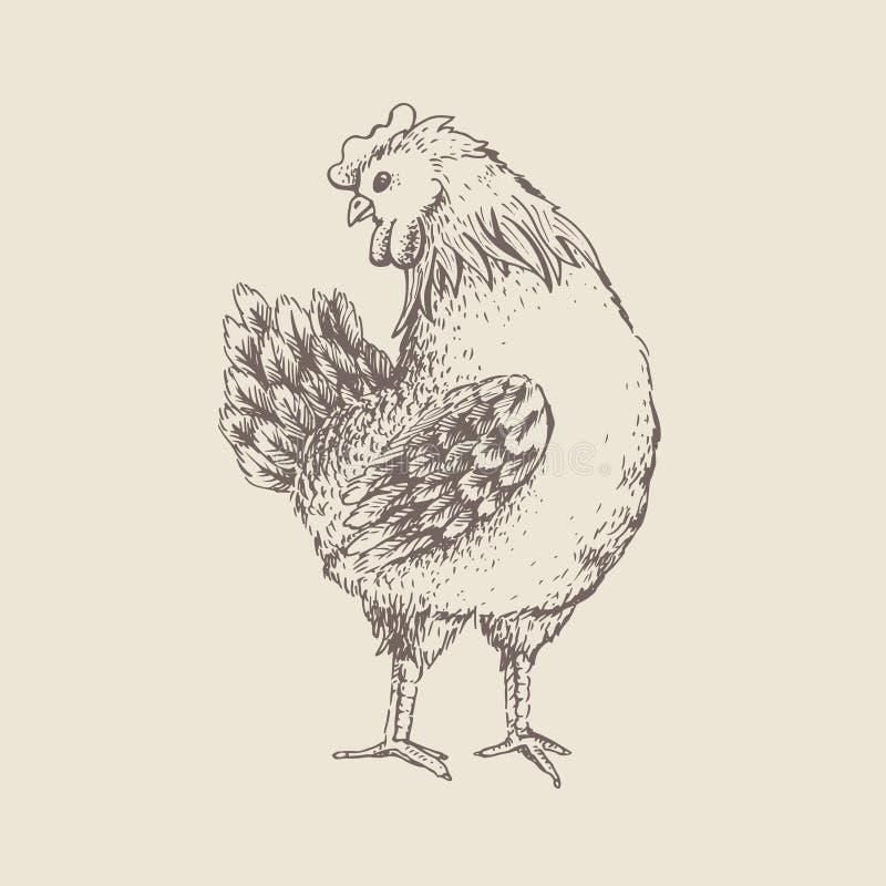 Conception de vintage avec la poule illustration libre de droits
