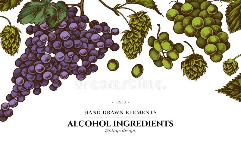 Conception florale avec des raisins colorés, houblon illustration stock
