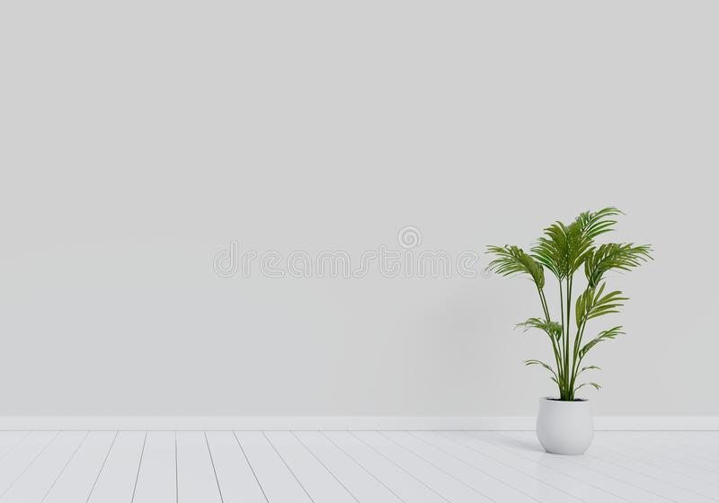 Conception int?rieure moderne de salon avec le pot naturel de plante verte sur le plancher en bois brillant blanc Concept ? la ma illustration libre de droits