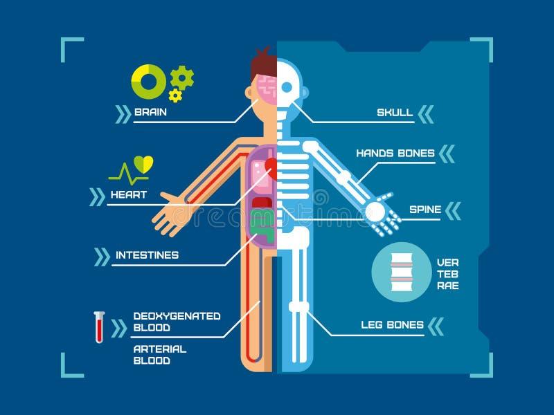 Conception plate d'Infographic d'anatomie de corps humain sur le bleu illustration de vecteur